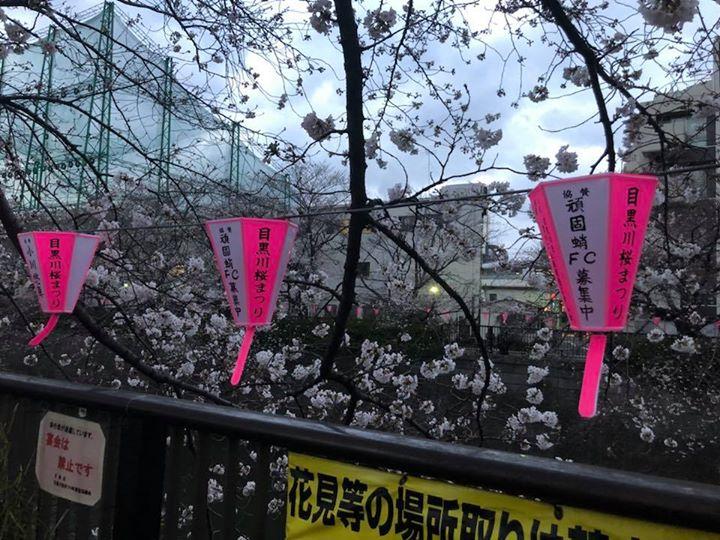 目黒川✨ぼんぼり出させてもらいました🏮少しは桜のライトアップに貢献できたでしょうか?🐙